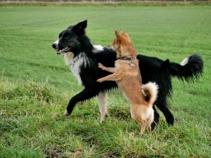 Homöopathie Für Den Hund Analbeutelerkrankung Forum Naturheilkunde