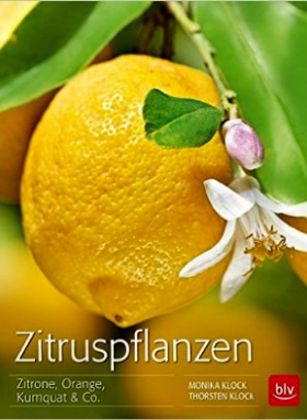Zitruspflanzen: Zitrone, Orange, Kumquat & Co